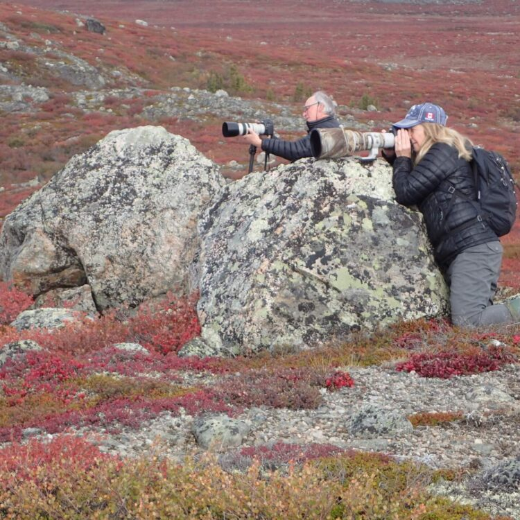 Two photographers leaning on boulders taking photographs in the barrens