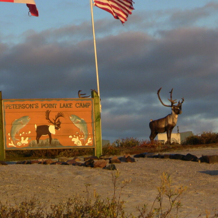 Bull Caribou standing beside Peterson's Point Lake Lodge sign