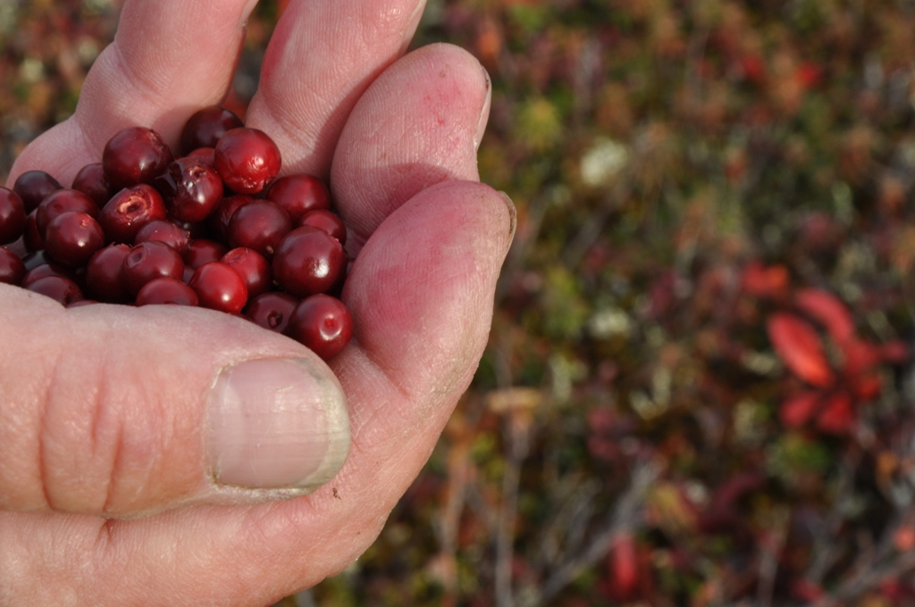 hand full of cranberries
